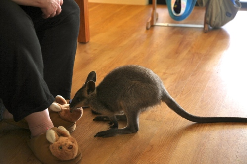 Derek eating Roo slippers