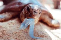 Turtle & Plastic shopping Bag