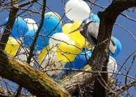 great-blue-heron-with-latex-balloons